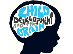 Child_Development_And_The_Brain